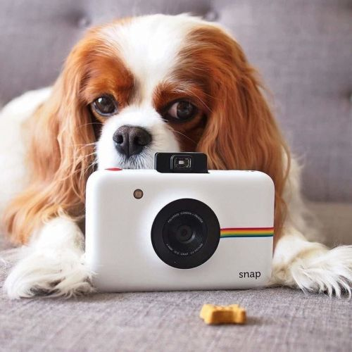 Is the Polaroid Snap worth considering? Here's our review