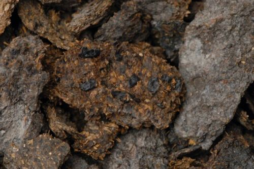 The proof's in the poop: Austrians have loved beer, blue cheese for 2,700 years