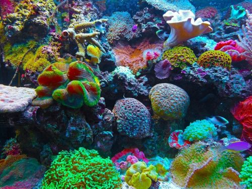 Underwater Speakers Could Help To Revive Dying Coral Reefs