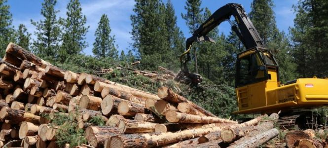 How much carbon does our lumber sequester?