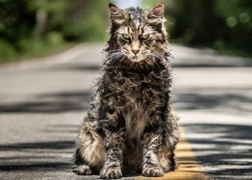 Pet Sematary 2019 movie based on Stephen King's horror story