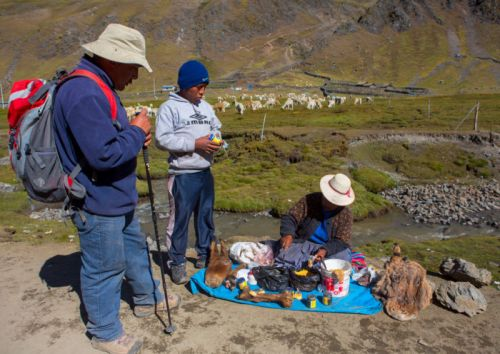 The genetic basis of Peruvians' ability to live at high altitude