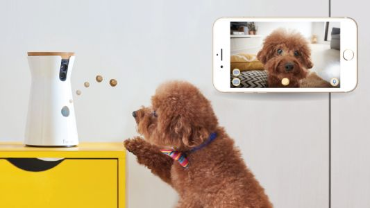 Get the treat-tossing Furbo 1080p Dog Camera for its lowest price yet $139