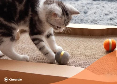 Cheerable smart interactive cat toy keeps your cat entertained