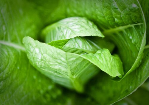Trash your romaine lettuce and don't eat any in restaurants, says the CDC