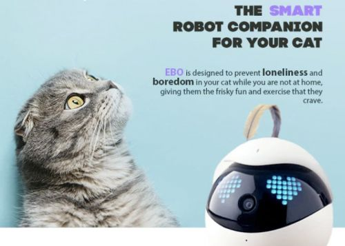 Play and watch with your cat remotely using your smartphone