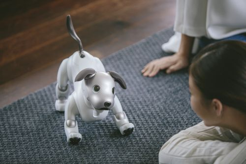 Sony's robot puppy Aibo is looking for a US forever home