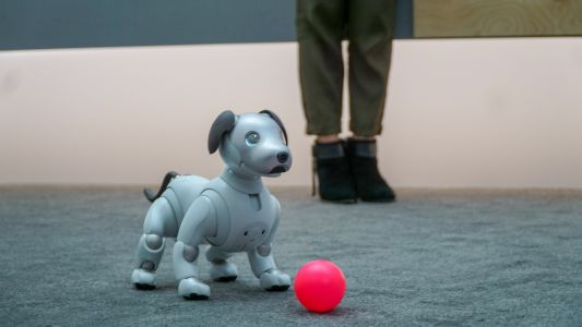 Sony Aibo is an adorable, artificially intelligent puppy for everyone