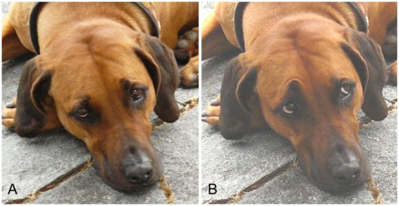 We may have inadvertently selected for muscles on dogs' faces