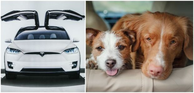 Tesla Launches 'Dog Mode' To Keep Your Furry Friend Safe In The Car
