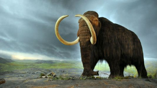 How long until we bring woolly mammoths back from extinction?