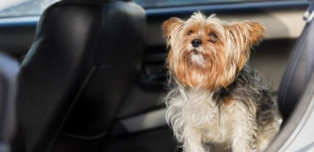 Pet-Friendly Cars Built With Furry Friends In Mind