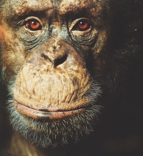 New estimate of primate mutation rates helps genetics match fossils