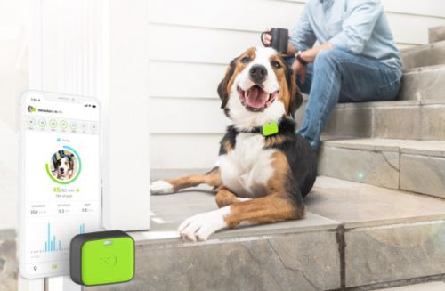 Whistle launches pet wearables for tracking location, health, and safety