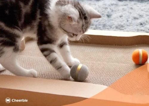 Cheerble scratch and catch interactive cat toy