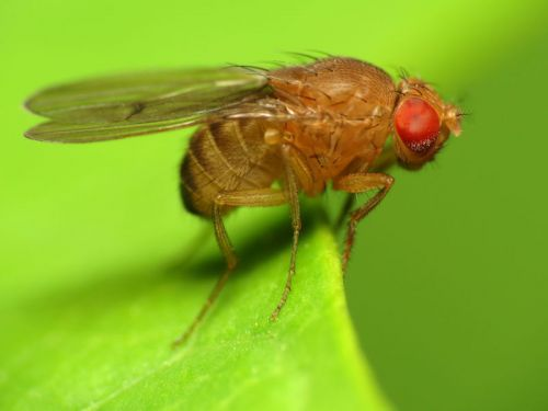 """The most complete brain map ever is here: A fly's """"connectome"""""""