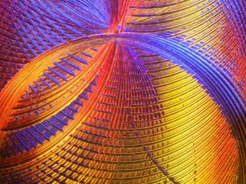The beauty of small things: A sampling of microscopy contest winners